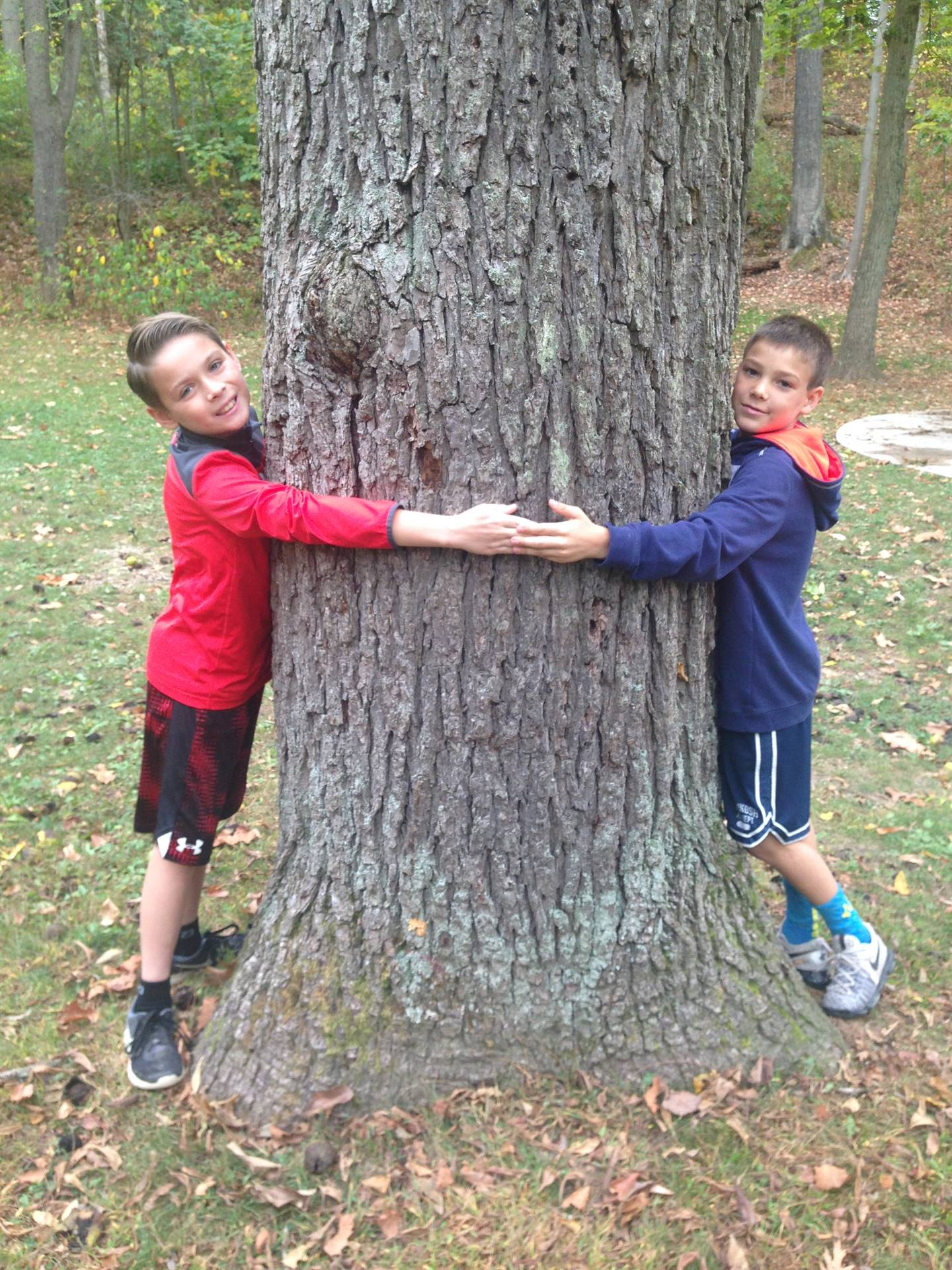 Boys measuring circumference of tree