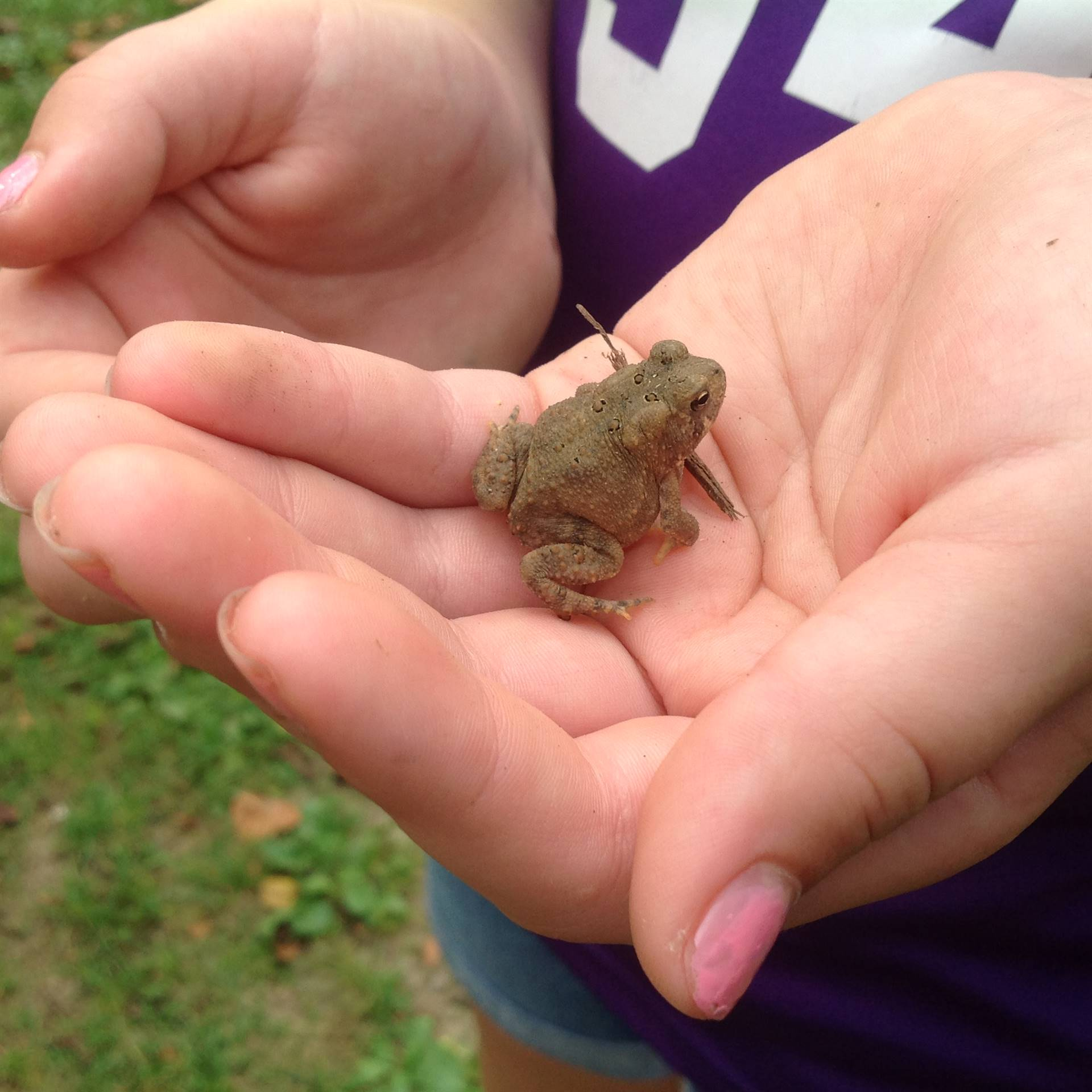 Finding a toad at the Metroparks