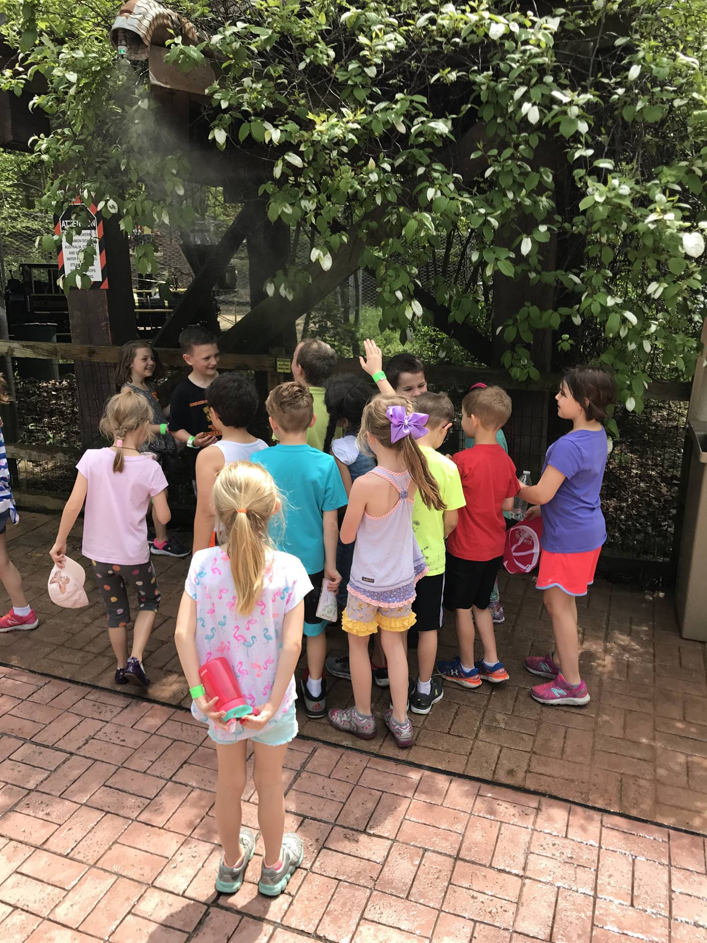 1st grade zoo trip May 2018