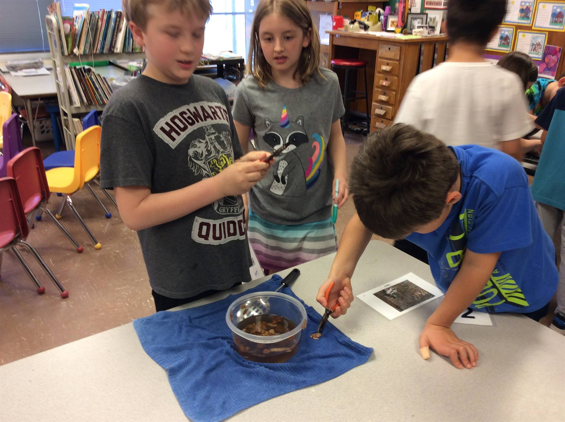 Discovering bird beaks work differently