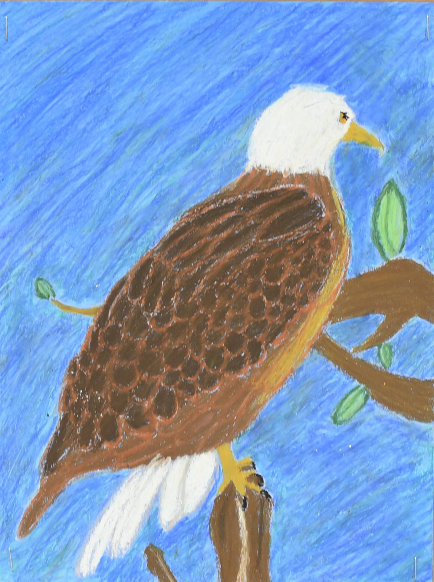Brecksville-Broadview Hts. Middle School Art Projects 123